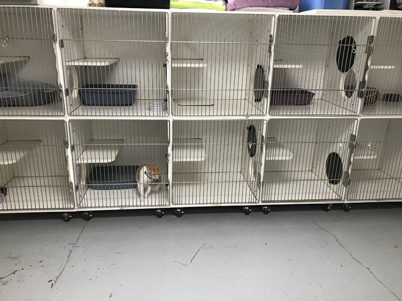 The cat kennel area