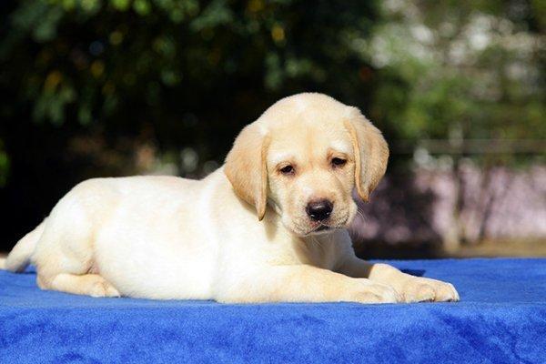 Dog Vaccinations in Keokuk, IA
