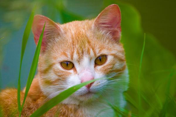 Keokuk, IA Veterinary Laser Therapy
